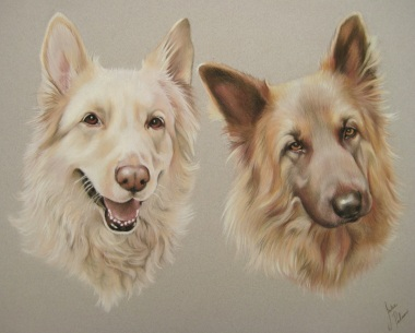 german shepherd dogs pastel portrait
