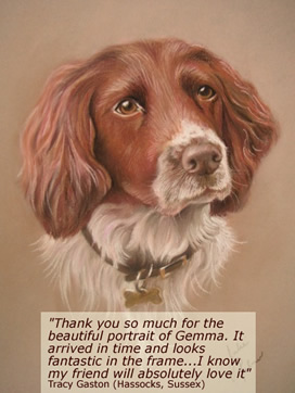 Pastel Pet Portrait of a Springer Spaniel