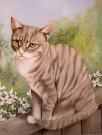 Tabby Cat Portrait in Pastels