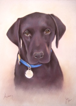 Black Labrador Portrait in Pastels