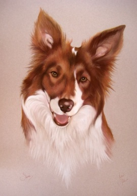 Head and shoulders portrait of a border collie dog in pastels