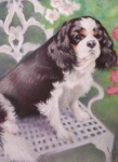 Full body portrait of a cavalier king charles spaniel  in pastels thumb