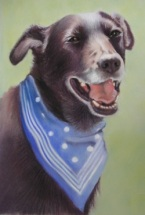 Portrait of a dog in pastels with features
