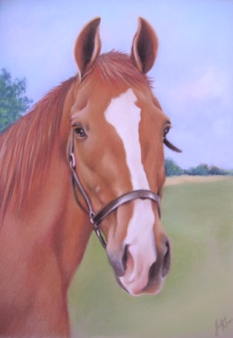 Horse Portrait in Pastels