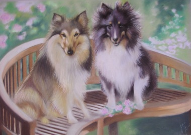 miniature collies