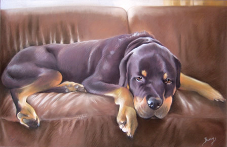 Dog Portrait of a Rottweiler