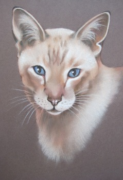 Siamese Cat Artwork