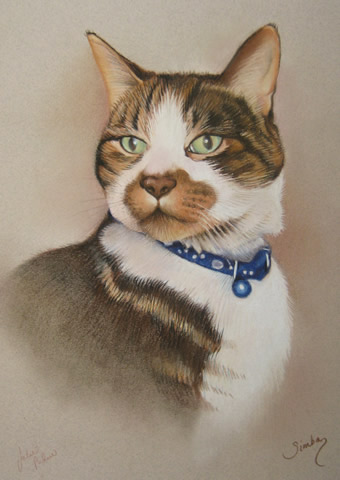 tabby cat portrait wearing a blue collar