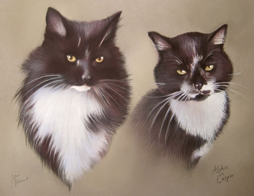 2 Black and White Cats