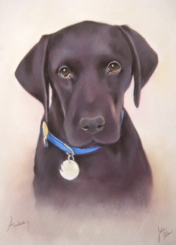 black labrador dog portrait