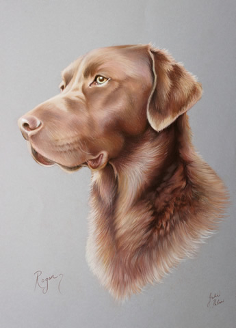 chocolate labrador dog portrait