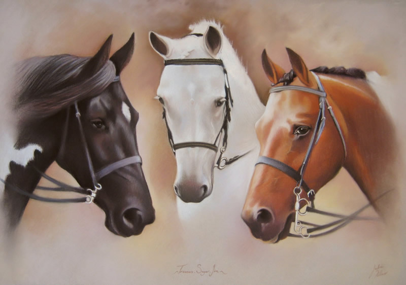 Portrait of three horses together